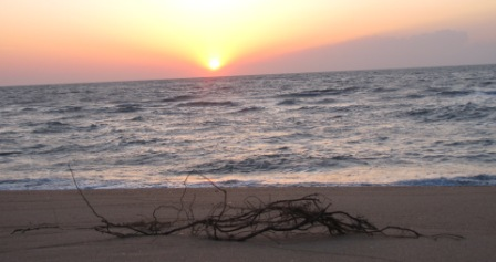 sunrise on cape hatteras with a beach branch