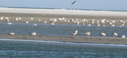 By bye Ocracoke Island