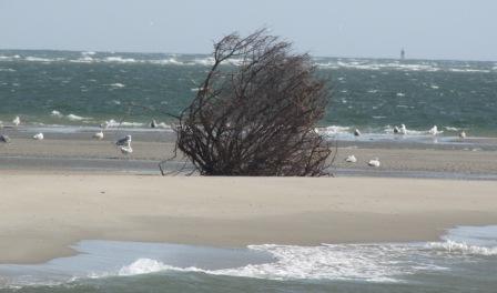 Ocean tumbleweed