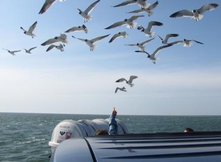 Seabirds follow the ferry