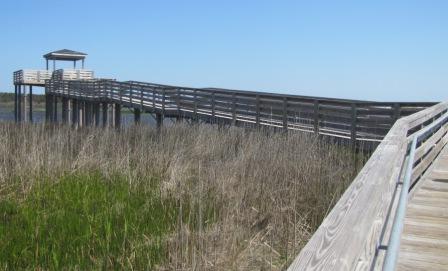 Bodie island Swamp viewing deck